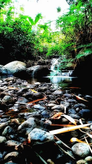 Water River Tree Water Pollution Sewage Drain Environmental Damage Air Pollution Garbage Dump Deforestation Water Plant Moss Floating On Water Stream - Flowing Water
