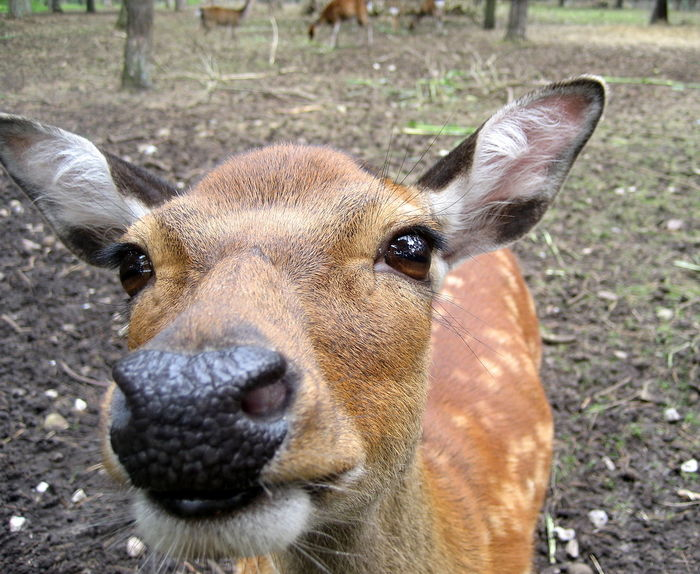 Animal Head  Animal Themes Animal Wildlife Animals In The Wild Close-up Day Deer Focus On Foreground Kopf Looking At Camera Mammal Nature No People One Animal Outdoors Portrait Reh