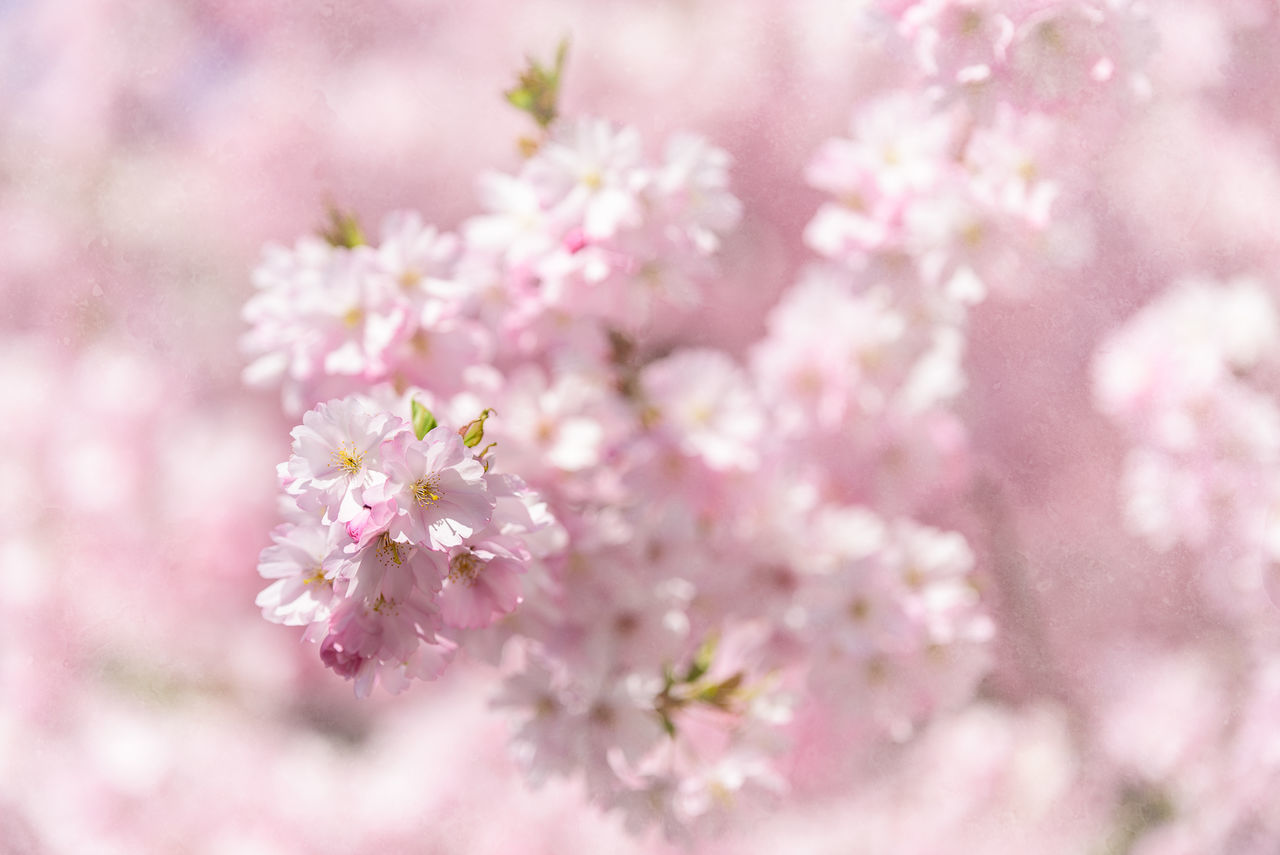 Close-Up Of Fresh Flowers Blooming On Tree