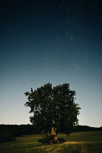 Tree on field against clear sky at night