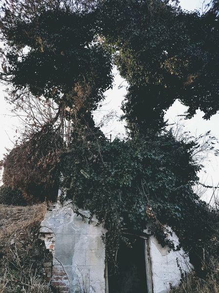 Church ruins. Churchruins Cementery Nature Naturetookover EyeEmNewHere