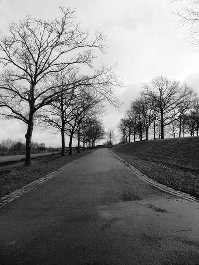Tree Road Bare Tree Sky Landscape Treelined Empty Road vanishing point Diminishing Perspective