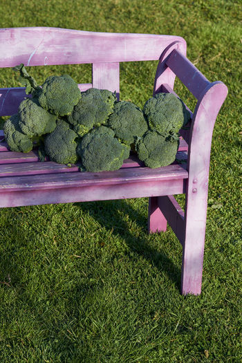 Absence Chair Day Empty Food Food And Drink Freshness Gardening Grass Green Color Growth Healthy Eating High Angle View Lawn Nature No People Outdoors Plant Purple Seat Vegetable Wellbeing