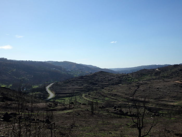 Burned Nature Landscape Mountain Agriculture No People Tree