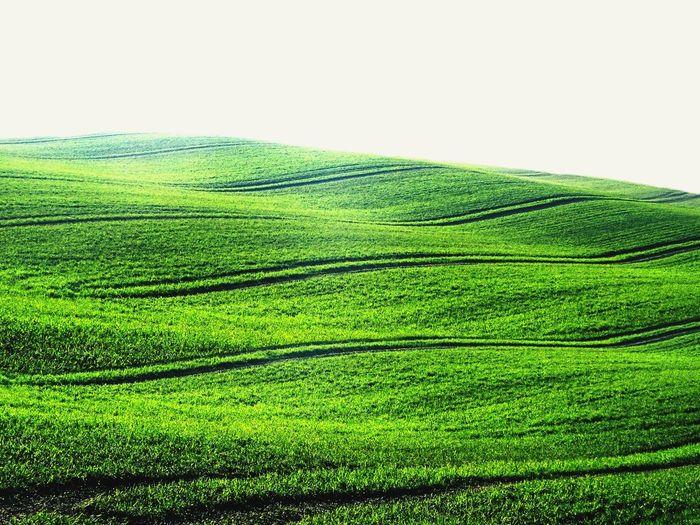Think Green! 😉