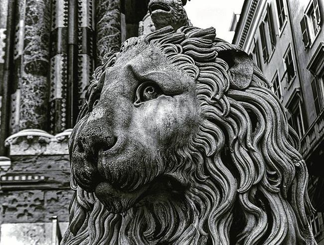 Italian lion got that flow ___________________________________ Genoa Genova Genovese Liguria Italy Italia Family Backpackingeurope Backpacking Traveltheworld Travel Curch Lion