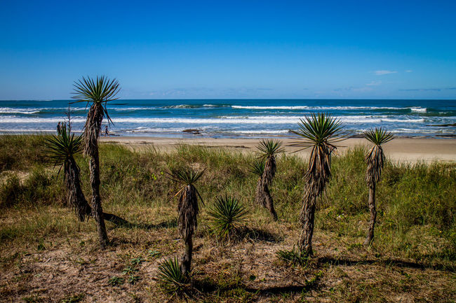 Torres, Brazil Beach Beauty In Nature Day Grass Growth Horizon Over Water Landscape Nature No People Outdoors Palm Tree Prainha Scenics Sea Sky Tranquility Tree