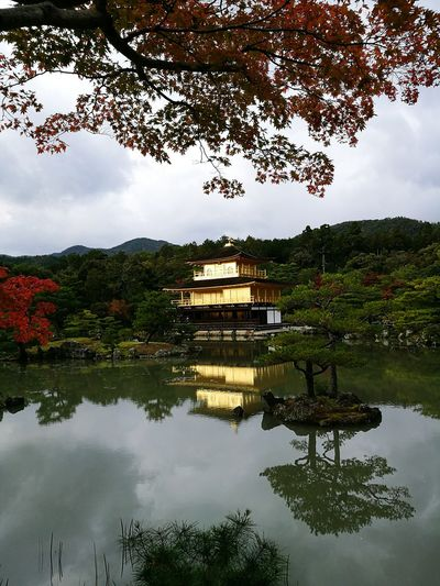 Kyoto, Japan Gold Temple Kyoto Japan Lake Lake View Tree Trees Reflection Reflections Reflections In The Water Reflection Lake Picturesque Beautiful Scenic Scenics Scenic View Picture Perfect Castle Golden Nature No Filter, No Edit, Just Photography The Purist ( No Edit, No Filter ) Picturesque Place