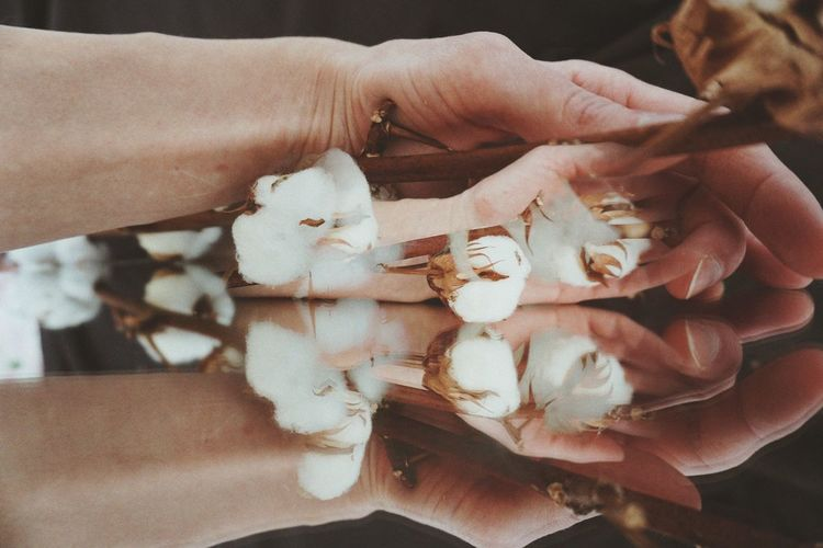 Close-up of woman hand holding cotton flower