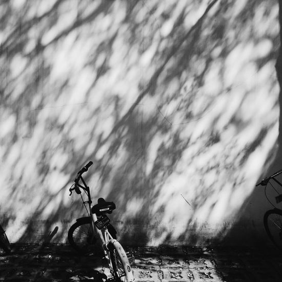 Tree Shadows Mobike Beauty In Nature Day Outdoors Nature