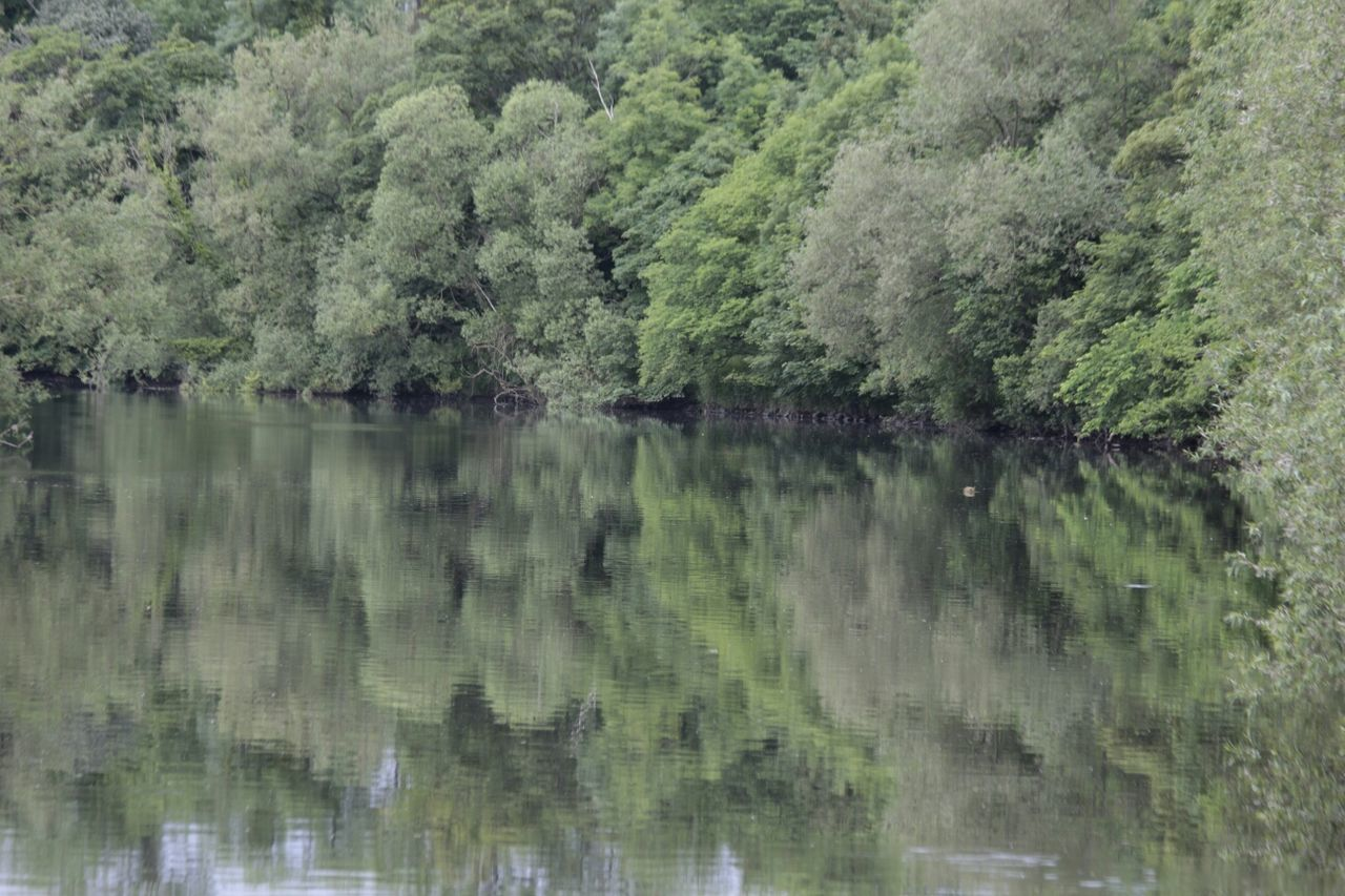 reflection, tree, water, nature, no people, lake, outdoors, forest, tranquil scene, day, green color, tranquility, scenics, growth, beauty in nature, sky