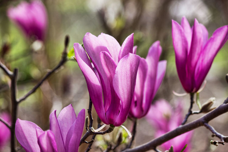 Pretty purple flowers Flowering Plant Flower Plant Beauty In Nature Vulnerability  Fragility Freshness Growth Purple Petal Close-up Nature No People Day Focus On Foreground Outdoors Botany Flower Head Springtime