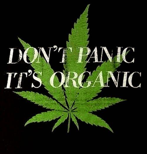 O que mata é o preconceito e a ignorância Art & Marijuana Canabis Organic