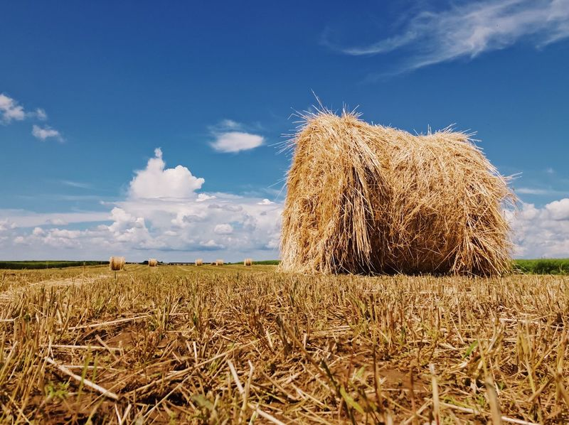 The beauty of a haystack 🌾... Peaceful Roll Quiet Hiker Travel Outdoors Summer ShotOnIphone Cereal Field Cereal Plant Straw Haystack Field Plant Landscape Land Agriculture Rural Scene Farm Nature Environment Tranquil Scene Growth Tranquility Crop  Beauty In Nature Hay Scenics - Nature Cloud - Sky No People