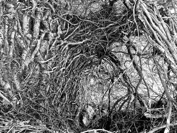 Full frame shot of bare trees on field