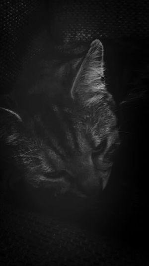 Zaandijk let me sleep you fool. Soft Kitty Warm Kitty Little Ball Of Fur, Happy Kitty Sleepy Kitty Pur Pur Pur