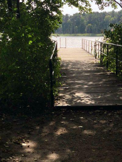 Seebrücke Plant