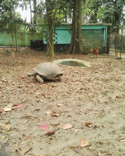Zoo, cote d'ivore
