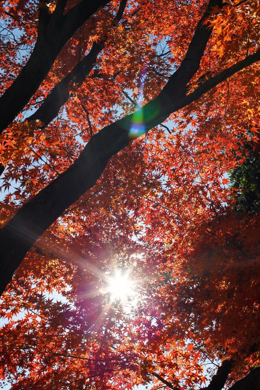 SUNLIGHT STREAMING THROUGH TREE DURING AUTUMN
