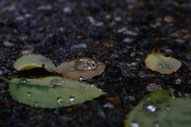 Leaf Leaves Street Raining Rainy Rainy Day Water Drops Water Droplets Water Reflections Rain Drops Wet Overcast Drizzle Canon Canonphotography Showcase April Wet Leaf Wet Leaves