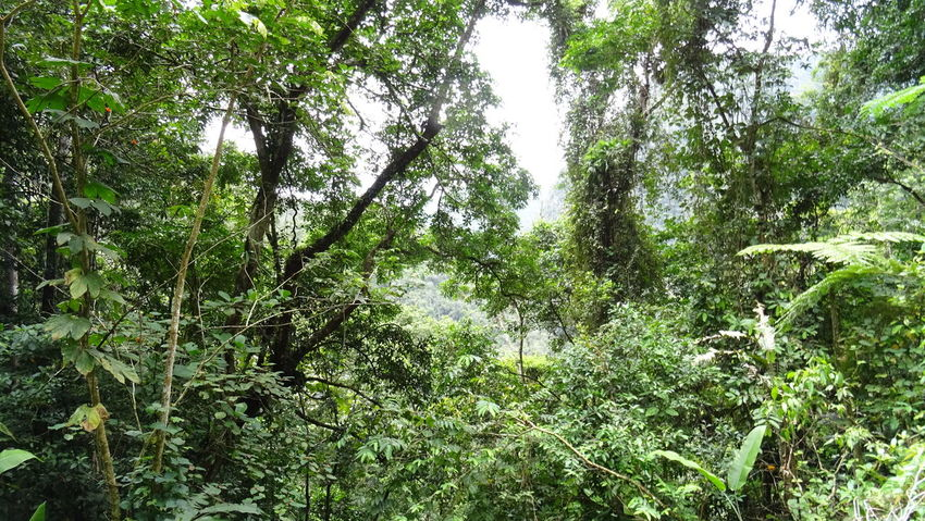 Beauty In Nature Branch Day Forest Forest Photography Green Color Growth Jungle Leaf Nature No People Outdoors Peru Plant Scenics Selva Tranquil Scene Tranquility Tree