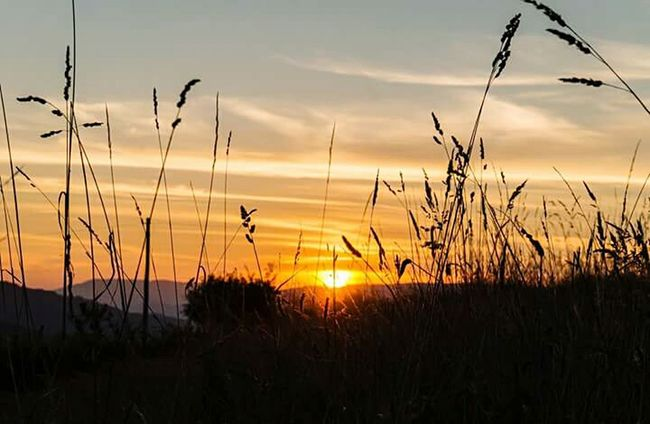 Sunset Sun Tranquility Tranquil Scene Silhouette Scenics Grass Beauty In Nature Nature Sky Cloud Idyllic Vibrant Color Plant Growth Orange Color Atmosphere Non-urban Scene Dramatic Sky Atmospheric Mood