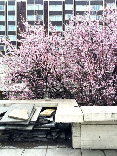 Urban Spring Fever Springtime Urban Landscape Urban Urban Nature Tree Pink Streetphotography IPhoneography Contrasts Nature Vs City Adapted To The City