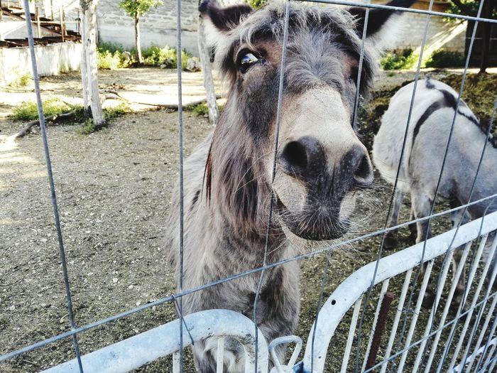 Cage Close-up Horse Chainlink Fence Horseback Riding Working Animal Animal Pen Pony Donkey