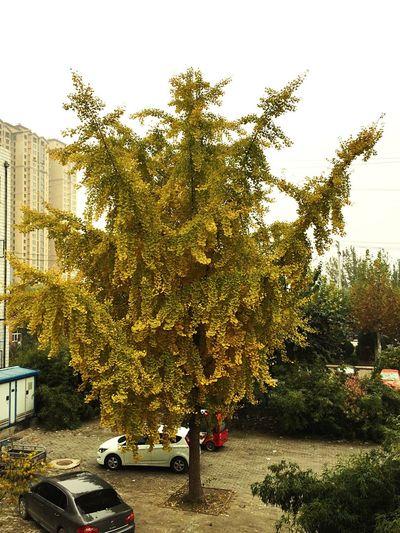 Autumn Tree By Lemonni