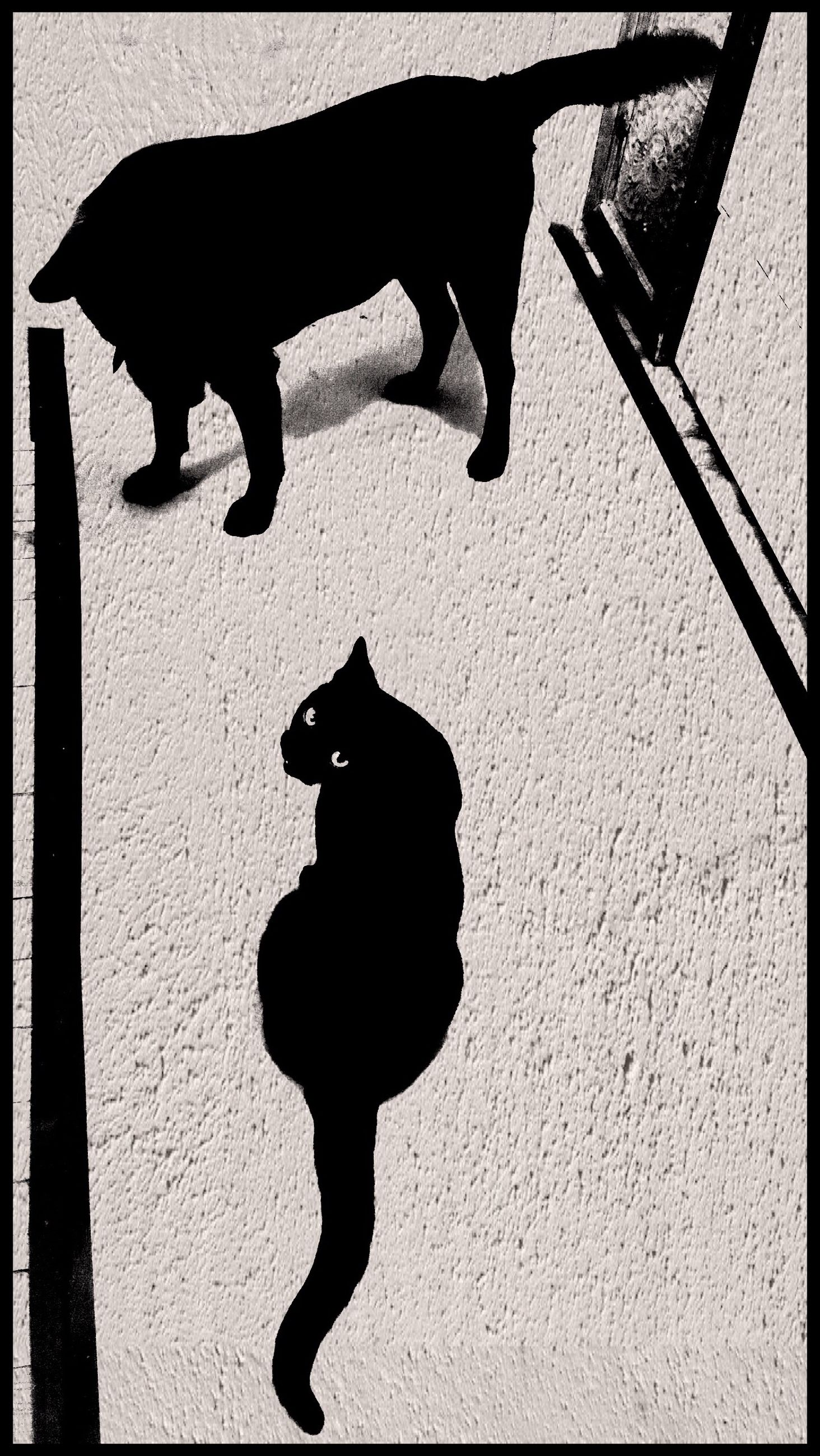 domestic animals, animal themes, pets, one animal, mammal, transfer print, dog, auto post production filter, full length, shadow, high angle view, black color, standing, walking, two animals, sunlight, pet leash, day, outdoors, zoology