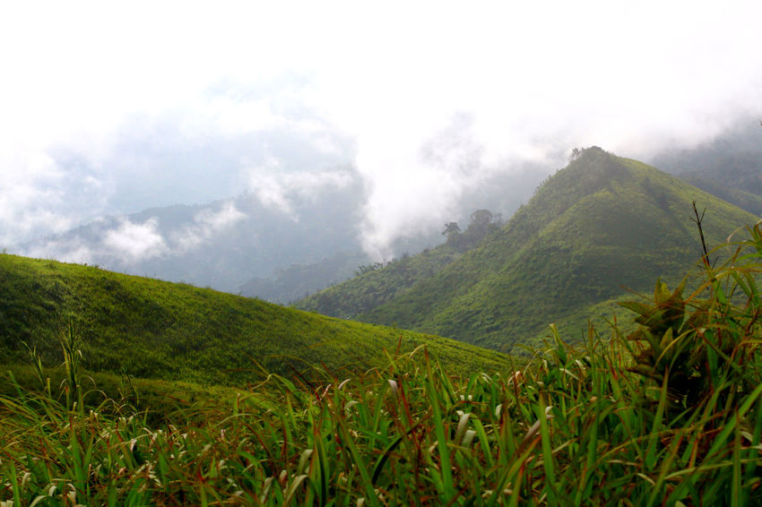 Mountain and the mist it's rain forest and fog Hill Rain Forest Landscape Plants And Flowers Adventure Mountain Nature Photography Grass Nature Natural Forest Blue Sky Light In Nature Rimlight Sunset Grass Field Flower Meadowflowers Tree Hiking Trail