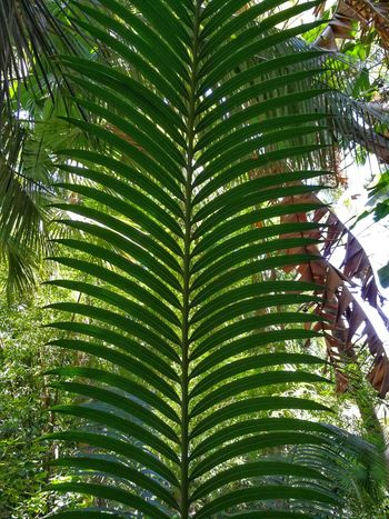 Nature Plants On The Wall Beauty In Nature No People Nature Palm Tree Leaf Close-up Green Color Plant Green Palm Leaf Young Plant Palm Frond Leaf Vein Leaves