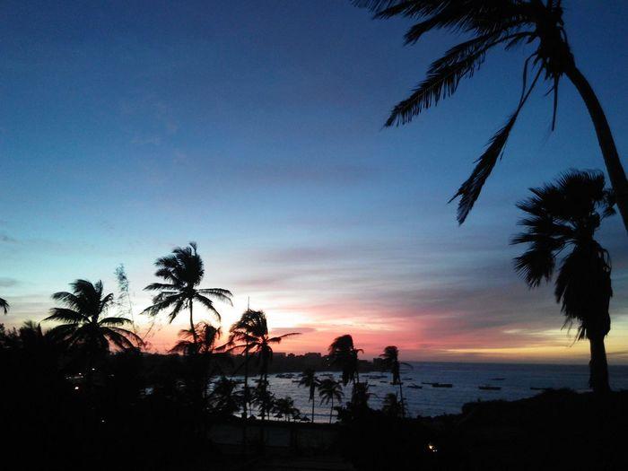 sunset WestAfrica Dakar Ngor Afrique Tree Water Palm Tree Sea Sunset Beach Coconut Silhouette Summer Swimming Coconut Palm Tree