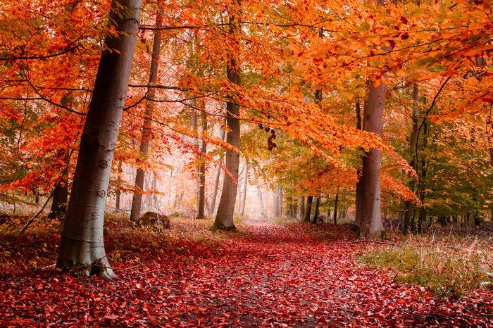 Lawantzenau Alsace France Automne Autumn First Eyeem Photo