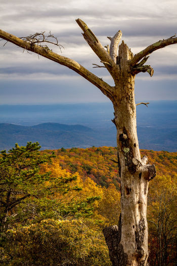 Dead tree on landscape against sky