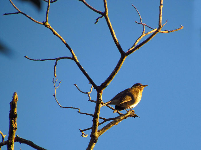 Animal Animal Themes Avian Bare Tree Beauty In Nature Bird Bird Photography Bird Watching Birds Birdwatching Blue Branch Branches Branches And Sky Low Angle View Nature Perched Perched Bird Perching Sky Sparrow Tranquility Tree Twig Wildlife