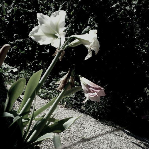 good bye lovly flower.. :'( </3