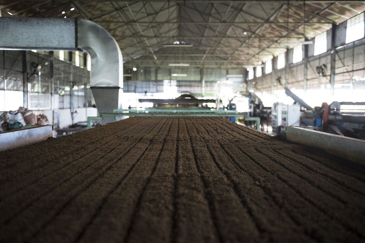 Tea Factory Beverage Conveyor Belt EyeEmNewHere Horizontal Industry Leading Lines Machine Tea Architecture Beverage Industry Built Structure Ceiling Day Factory Indoors  Large Scale No People Processing Raw Food Surface Level Tea Factory Tea Industry Tea Processing Tea Production The Way Forward