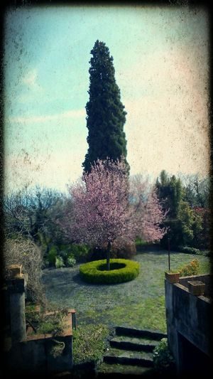 Spring is coming! Purple Flowers March Showcase Countryside Sunday Morning Sicily, Italy