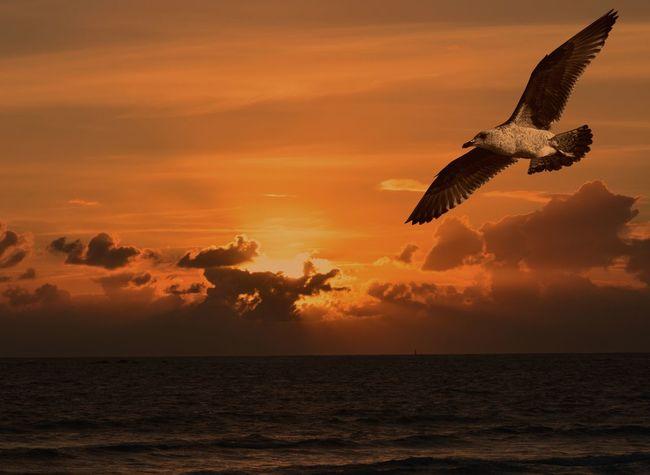 Bretagne Coucher De Soleil Oiseaux
