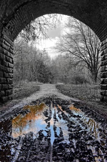 Reflection of bare trees in puddle during winter