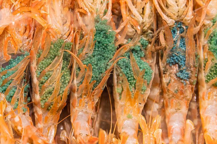 Full frame shot of shrimpe with shrimp eggs at a market in japan