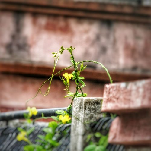Brick Wall Plant Growth Architecture Built Structure Outdoors Day Ivy No People Building Exterior Nature Flower Window Box Close-up Mix Yourself A Good Time