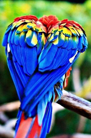 Love♡ Heart Shaped  Parrots Colorful