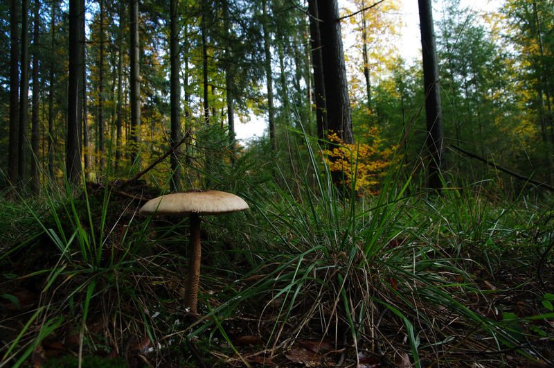 Mushroom growing in forest