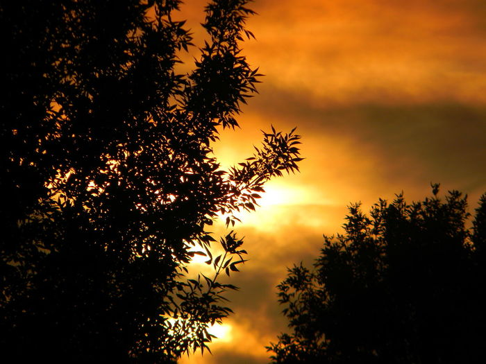 SUNSET AND SHADE Beauty In Nature Nature Silhouette Sky Sunset Tranquil Scene Tree First Eyeem Photo