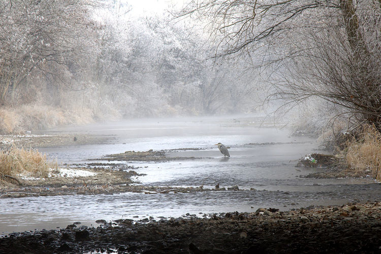 Szene in mitten der Stadt Animal Themes Beauty In Nature Day Fog Nature No People Outdoors River River Fog River View Scenics Water Winter Fog Wintertime