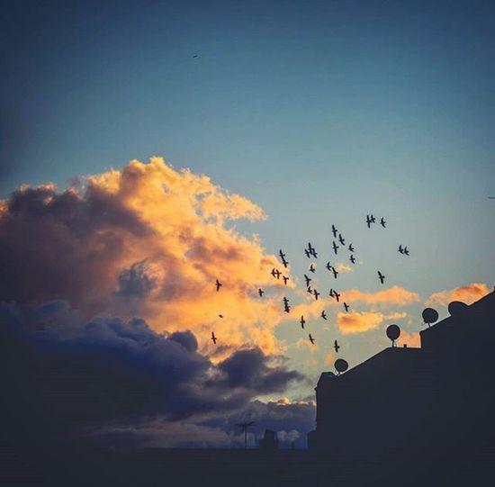 """тнe ғeelιng oғ ғreedoм"" 🐦☁🌞 °°°°°°°°°°°°°°°°°°°°°°°°°°°°°°°°°°°°°°°°°°°°°°°°°°°°°°°°°°°°°°°°°°°°°°°°°°°°°°°°°°°°°°°°°°°°°°°°°°°°°°°°°°°°°°°°°°°°°°°°°°°°°°°°°°°°°°°°°°°°°°°°°°°°°°°°°°°°°°°°°°°°°°°°°°°°°°°°°°°°°°°°°°°°°°°°°°°°°°°°°°°°°°°°°°°°°°°°°°°°°°°°°°°°°°°°°°°°°°°°°°°°°°°°°°°°°°°°°°°°°°°°°°°°°°°°°°°°°°°°°°°°°°°°°°°°°°°°°°°°°°°°°°°°°°°°°°°°°°°°°°°°°°°°°°°°°°°°°°°°°°°°°°°°°°°°°°°°°°°°°°°°°°°°°°°°°°°°°°°°°°°°°°°°°°°°°°°°°°°°°°°°°°°°°°°°°°°°°°°°°°°°°°°°°°°°°°°°°°°°°°°°°°°°°°°°°°°°°°°°°°°°°°°°°°°°°°°°°°°°°°°°°°°°°°°°°°°°°°°°°°°°°°°°°°°°°°°°°°°°°°°°°°°°°°°°°°°°°°°°°°°°°°°°°°°°°°°°°° Photooftheday Freedom Free Nature Sunset Birds Sky Photographyislifee Nyip Instgram Photography Instagood Sun Clouds Cloudporn Photoofthenight Sunsets Natureperfection Clouds Sunsetporn Instalove Bronx"