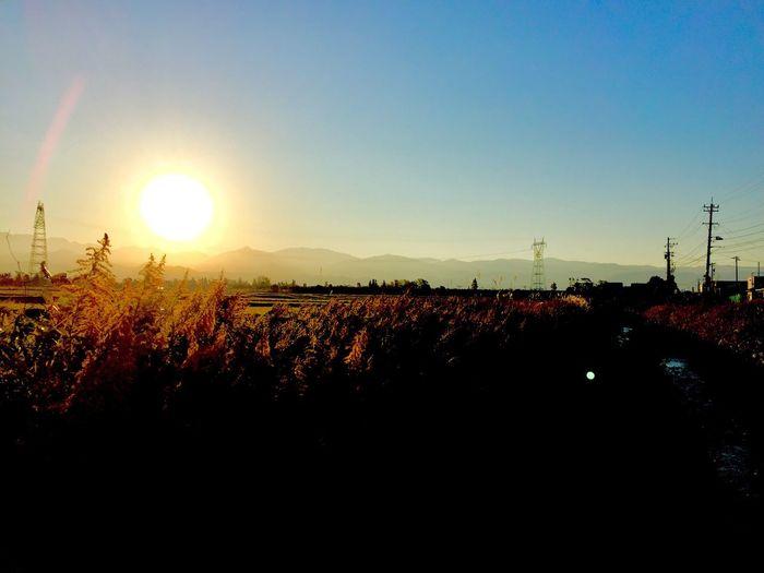 朝日 早朝 空 田んぼ セイタカアワダチソウ Morning Morning Sun Morning Light Morning Sky Early Morning Sun Sky Field Goldenrod 散歩 Morning Walk