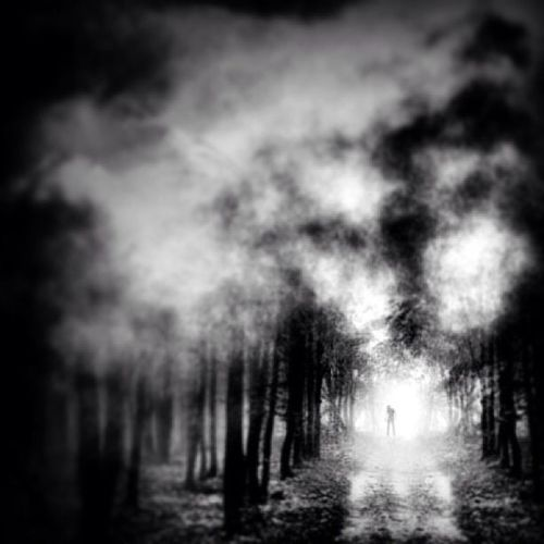 Misty Morning,